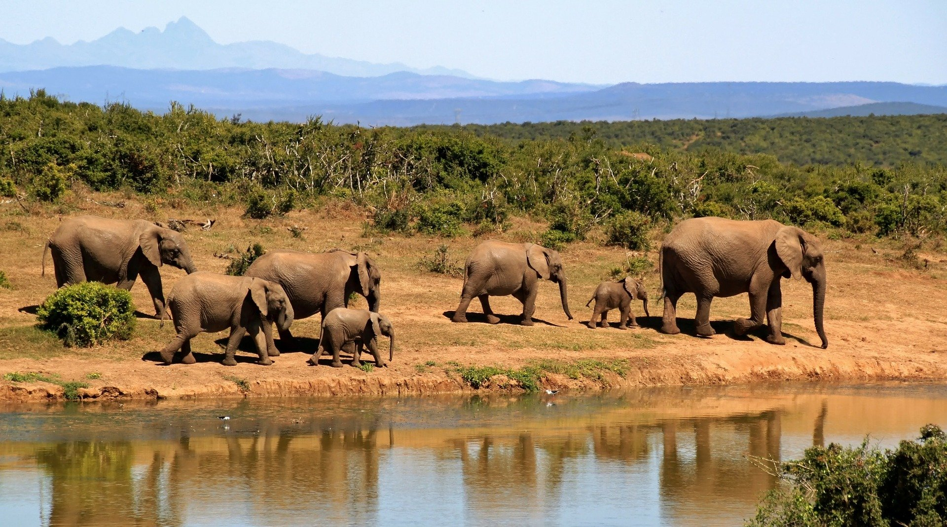Safari by Holidu