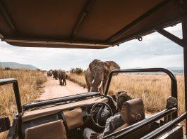 Safari 4 by Holidu