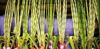 Estas son una imágenes de las palmas que se pueden encontrar en la celebración del Domingo de Ramos.